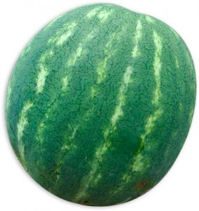 Seedless Watermelon Hand pollination