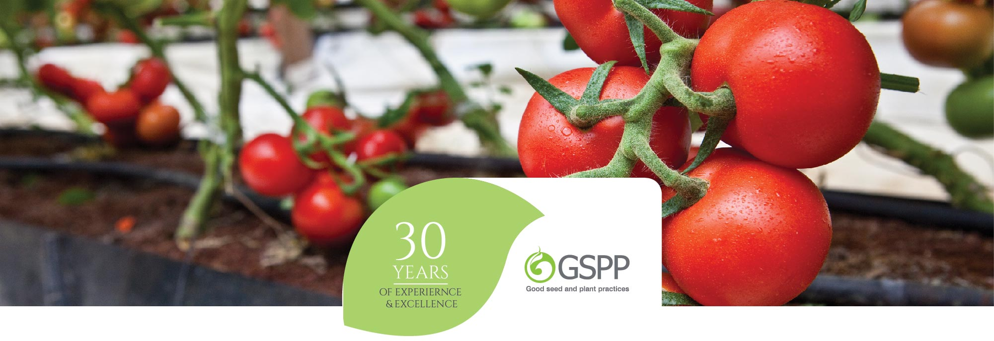 YAFFE SEEDS PRODUCTION - GSPP